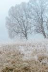 Ледяное утро в Центральном парке, Фото: 5