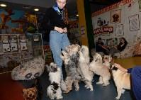Выставка собак DogLand, Фото: 2