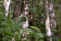 В лесу под Тулой поисковики нашли тайник с гранатами, Фото: 19