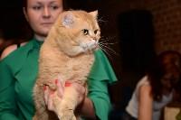 Выставка кошек в Искре, Фото: 68