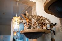 Экзотические животные в квартире, Фото: 53