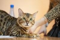 В Туле прошла выставка «Пряничные кошки» , Фото: 118