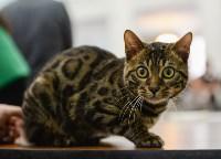 Выставка кошек в Туле, Фото: 45