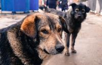 Дворняги, дворяне, двор-терьеры: 50 фото самых потрясающих уличных собак, Фото: 23
