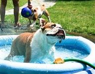 Забавные собаки, Фото: 9