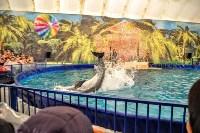 Шоу карибских дельфинов, Фото: 7