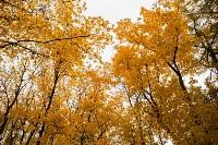 Золотая осень в Туле-2019, Фото: 24