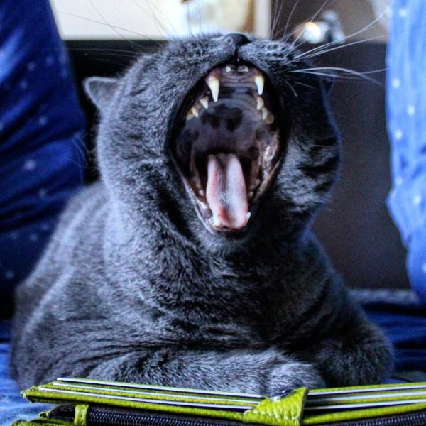 Котиков я залью. Не могу не запостить!