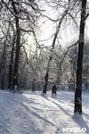 Зимняя сказка Платновского парка, Фото: 17