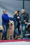 Выставка собак в Туле, Фото: 92