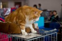 Выставка кошек в ГКЗ. 26 марта 2016 года, Фото: 42