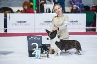 Выставка собак в Туле, Фото: 119
