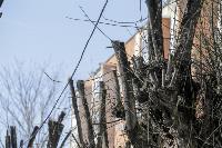 Кронирование деревьев в Туле: что можно, а чего нельзя?, Фото: 20