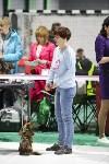 Выставка собак в Туле 14.04.19, Фото: 25