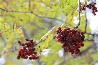 Осень, Фото: 40