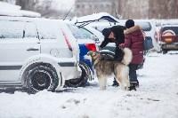 Выставка собак в Туле, Фото: 129