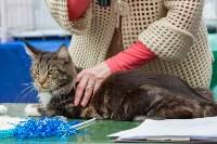 Выставка кошек в Туле, Фото: 12