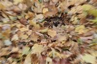 Осень, Фото: 14