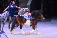 Цирковое шоу, Фото: 62