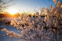 Снежное Поленово, Фото: 59