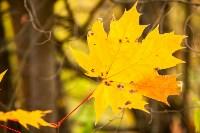 Золотая осень в Туле-2019, Фото: 90