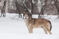 Дворняги, дворяне, двор-терьеры: 50 фото самых потрясающих уличных собак, Фото: 7