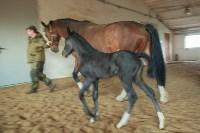 «Куликово поле» объявляет конкурс на лучшее имя для маленькой лошадки, Фото: 5