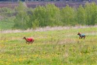 В Туле состоялись собачьи бега, Фото: 29
