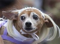 Собачий карнавал, Фото: 6