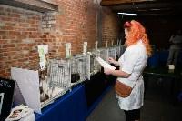 Выставка кошек в Искре, Фото: 38