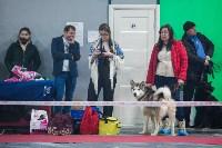 Выставка собак в Туле, Фото: 112