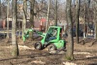 Жуки-короеды напали на деревья в Горелках, Фото: 6
