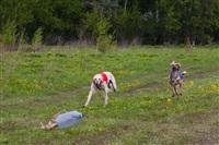 В Туле состоялись собачьи бега, Фото: 46