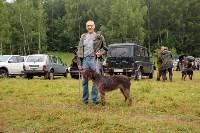 Выставка охотничьих собак под Тулой, Фото: 11