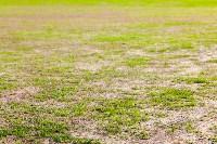 Как Центральный стадион готов к возвращению большого футбола, Фото: 36
