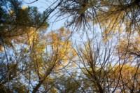 Центральный парк, утро, осень, Фото: 33