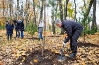 В Центральном парке Тулы появился сосновый бор «Слободы», Фото: 20
