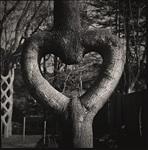 Цирк деревьев, Фото: 6
