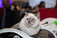В Туле прошла выставка «Пряничные кошки» , Фото: 74