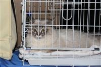 В Туле прошла международная выставка кошек, Фото: 4