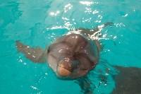 Дельфины, Фото: 3