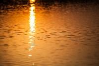 Золотая осень в Тульской области, Фото: 36
