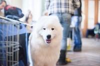 Выставка собак в Туле, 29.11.2015, Фото: 18