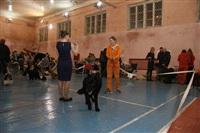 В Туле прошла всероссийская выставка собак, Фото: 5