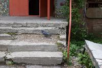 Туляки жалуются на разрушенные ступеньки возле подъезда, Фото: 12