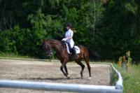 В Ясной поляне стартовал турнир по конному спорту, Фото: 87
