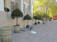 "В Богородицком дворце-музее декорируют площадку для съемок фильма ""Анна Каренина"", Фото: 2"