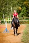 Новые лошади для конной полиции в Центральном парке, Фото: 13