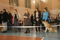 В Туле прошла всероссийская выставка собак, Фото: 36