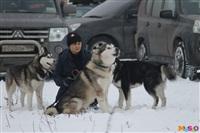 Куликово поле. Гонки на собачьих упряжках., Фото: 61
